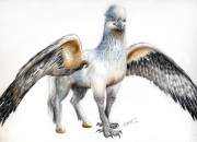 Hippogriff_drawing